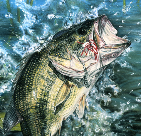 Pastel Largemouth Bass Painting Fish Art By Roby Baer