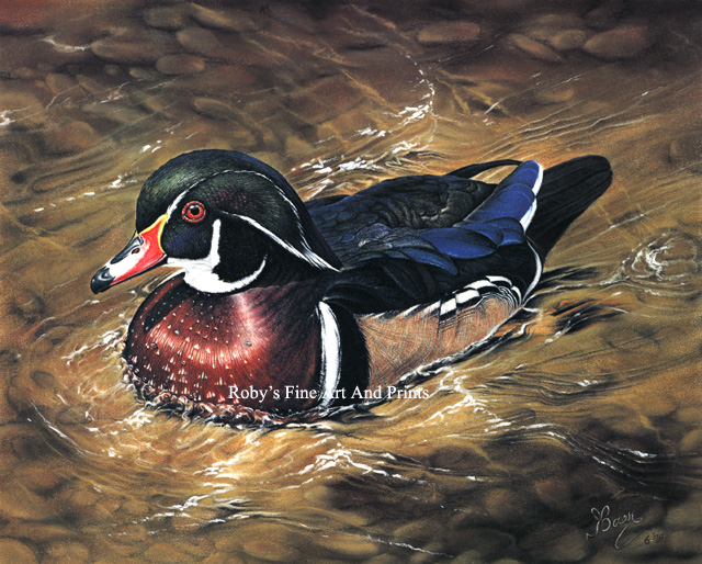 Pastel Wood Duck Drake Painting Wildlife Art By Roby Baer